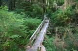 rainforest_trail 010